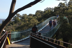 If you can handle the vertical climb up Mount Street (Iggy managed this while pushing Andrew in his stroller) the reward is phenomenal. King's Park is a Perth must-see. The aerial walkway takes you through the tree tops, with views out over the water and into the bush below.